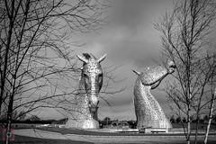 The Kelpies, Falkirk, Scotland (picsbyCaroline) Tags: kelpies falkirk scotland structure horses statues attraction tourist metal tree landscape magnificent beautiful unique helix central
