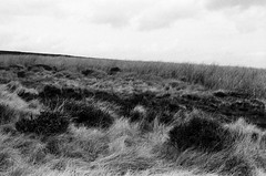 Grass & Sky: early spring on the moors (Richie Rue) Tags: ilkley burley moor moors moorland grass heather sky landscape film analogue analog ishootfilm istillshootfilm filmsnotdead nograinnoglory outdoors spring cold nikonf801s fomapan400 champion promicrol contemplative contemplation mindful 35mm blackandwhite