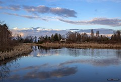 The Pond (Clayton Perry Photoworks) Tags: vancouver bc canada richmond terranova winter explorebc explorecanada reflections