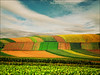 Spring song (Katarina 2353) Tags: spring landscape fields katarinastefanovic katarina2353