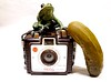 Frog on a Brownie with Pickle Still Life (ricko) Tags: frog camera brownie pickle stilllife 69365 2018