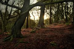 Dismal dawn! (PentlandPirate of the North) Tags: biddulpgrangecountrypark staffordshire trees dawn dogphotowalk bored