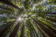 (https://www.facebook.com/pages/Vrad-Photography/79) Tags: nikon california redwoods trail hiking forest trees tree