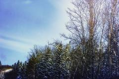 along the road (Vanessa wuz here) Tags: landscape 50mm niftyfifty blueskies edmontonrivervalley edmonton yeg sunlight clouds