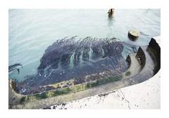 _JP28100 (Jordane Prestrot) Tags: jordaneprestrot murano ⛎ venise venice venezia algues algae seaweed algas