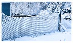 Wonderland (Timothy Valentine) Tags: 2018 0318 home fence snow eastbridgewater massachusetts unitedstates us