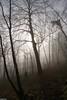 Brume et soleil au petit matin dans la Forêt du Bois Vivier - Cussey Sur Lison (francky25) Tags: brume et soleil au petit matin dans la forêt du bois vivier cussey sur lison franchecomté doubs