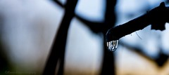The beauty of rain. (Kerstin Winters Photography) Tags: minimalism minimal detail macroliquid macro nahaufnahme closeup newmexico nikkor nikon nikondigital nikondsl naturephotography naturfotografie flickrnature flickr wassertropfen wasser water silhouette dark branch ast baum regentropfen regen tropfen tree outdoor raindrops rain