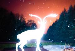 (whitey_hendrix) Tags: huntly aberdeenshire scotland ricohgr flash fullfrontal bragdonbrothers rain snow deer