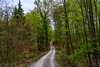 Day walk (Brian Out and About) Tags: nikon d5200 woods trails walking europe germany stuttgart explore travels copyright2018brianblair