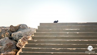 Cats in Valencia Spain 1049