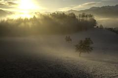 sonnenberg trees (adlin) Tags: sonnenberg kriens morning sunrise sun snow trees light wonderful home