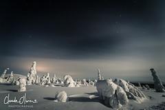 Dark night (Claude-Olivier Marti) Tags: landscape laponie laponiefinlandaise lapland luosto finlande finnishlapland finnish winter snow snowlandscape nikond850 d850 night nightshot cold froid cerclepolaire artic