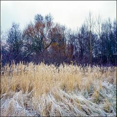 Snowless December - Kodak E100 VS (magnus.joensson) Tags: sweden swedish skåne arrie frost sunrise december rolleiflex 35 6x6 medium format carl zeiss tessar 75mm e6 kodak e100vs 120 ektachrome professional color slide exp2007 epson v800 scan