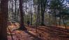 Afternoon light - Upper Reelig Woodland walk (MoniackLodges) Tags: inverness moniack dogfreindly dogs forest forestwalks lochness moniackburn moniacklodges reeligglen scotland scottishhighlands scottishhighlandsselfcatering trees upperreeligwoodland walk