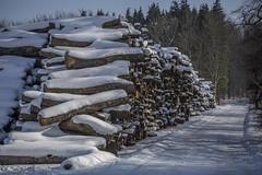 Winter in Scania (FanFan Babii or just plain Buffan) Tags: winter vinter scania skåne logs wood snow wintertime winterday day midday hiking sunshine bluesky road