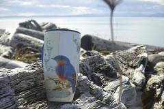 068:368-March 9-Coffee Break (karendunne337) Tags: