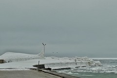 Icy feeling (Alizarin Krimson) Tags: crow swans flying jetty icy ice ljugarn gotland