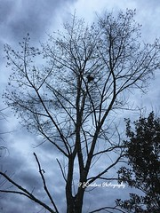 Cloudy Wind Tree Day (Jack4Phil) Tags: clouds outdoors gray black trees