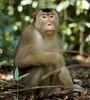 L1711984 (sjefrobroek) Tags: bukit lawang sumatra