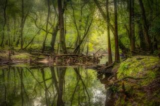 Logjam on Black Creek