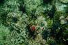 Isla del Espiritu Santo (jmc.cantero) Tags: submarina flora espiritu santo
