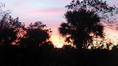 20180213_28 Winding Waters West Palm Beach Florida USA (FRABJOUS DAZE - PHOTO BLOG) Tags: windingwaters naturalarea westpalmbeach westpalm wpb palmbeachcounty pbc fl fla florida usa yhdysvallat sunshinestate auringonlasku sunset sundown dusk hämärä luontokuvaus naturephotography luonto nature