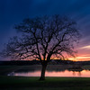 Sunset at the Timberwood Tree (alfredomoraphotography) Tags: zeissbatis batis18 flm a7rii sonyimages sony lonetree tree texas sanantonio pond water longexposure clouds landscape sunset