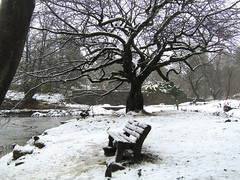 All White With a View (Neale H) Tags: winter snow tree bench countryside rural nature rivington england lancashire