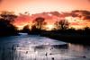 Sunset (Maria Eklind) Tags: sweden ribban winter reflection ribersborg malmö sky sunlight himmel öresundsparken solnedgång outdoor sunset spegling light ice skånelän sverige se