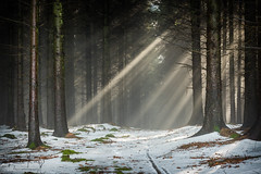Woodland Rays (PKpics1) Tags: breathtakinglandscapes hopcott minehead snow somerset westsomerset hill landscape trees woods wood tree forest rays sunrays light mist misty moss leaves plants nature track sunlight winter moody silent silence nikon d810