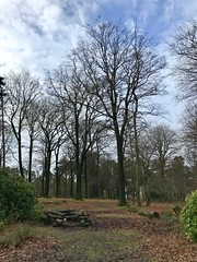 Granby Wood, Longshaw Estate 2018 (Dave_Johnson) Tags: granbywood tree trees wood woods longshaw longshawestate nationaltrust nt peakdistrict derbyshire
