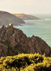 granite & gorse (tonysemmens) Tags: cornwall coastpath colours nikond7000 sigma1750mm kernow heaven granite rugged seascape