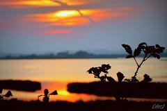 ___ tramonto....particolare! (erman_53fotoclik) Tags: panasonik dmc tz25 tramonto sunset particolare riflesso cielo acqua rovi controluce vespro imbrunire erman53fotoclik spine