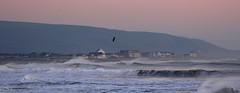 Tywyn at sunset (Sue Wolfe) Tags: wales cymru meirionnydd ceredigion westwales nature autumn welshwildlifebreaks welshcoast coast birds birdwatching sea seashore sunset abertrinant tywyn wildlife
