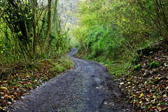 The paceful road (annalisabianchetti) Tags: road strada countryroad woods boschi nature natura autumn autunno paceful quiete paesaggio landscape