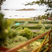 Hedged fields, sea view from a gate, The Scilly Isles, UK