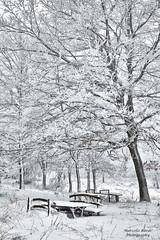 Snow ... (guitarmargy) Tags: winter snow freddo ice landscape paesaggio panorama inverno cold ghiaccio neve marcellobardi fotografo photo canon stagione bianco nero alberi panchine toscana season picture