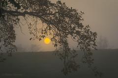 Auringonlasku Kaivopuistossa (Markus Heinonen Photography) Tags: kaivopuisto brunnsparken puisto park helsinki stadi helsingfors puu tree auringonlasku sunset sumu dimma fog luonto nature suomi finland europe aurinko sun