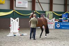 2014-03-n5-0063 (dolphinpix) Tags: horse pony stallion breeding show showcase equine equestrian
