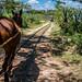 2018 - Mexico - Hacienda Sotuta de Peón - Decauville Rail Line