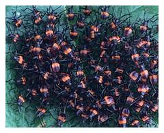 Arañas (allozano2002) Tags: araña insectos bichos naturaleza colores vista arágnidos nido maraña hoja foto