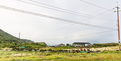 Jeju Island - South Korea 2016 (MonkeyTakingPics) Tags: red korea southkorea jejudo jejuisland jeju asia travel travelphotography landscape roadtrip green grass hills people wild nature animals horse lines canon7d canon dslr 7d 1018mm ngc national