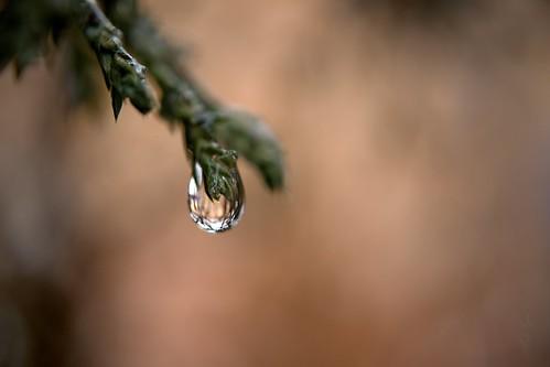 One drop of water / Egy csepp víz