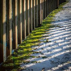 Streifen (Doblinus) Tags: schleswigholstein oeversee zhongyilensturboii minolta minolta3570mmf35 andertreene germany fotowalk treene manuellesobjektiv altesobjektiv