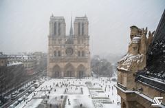 First snowflakes (A.G. Photographe) Tags: paris parisien parisian france french français europe capitale anto antoxiii xiii ag agphotographe notredame cathédrale parvis préfecturedepolice hiver flocon snow neige d850 nikon nikkor 2470vr