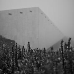 Rosmarine (Til..) Tags: nikon d7100 nikond7100 35mm rosmarine nebel fog blackwhite bw abstract abstrakt