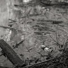 Lahnhochwasser 03/ 2019 (Dörte Krell) Tags: minolta autocord 6x6 mf mediumformat ilford hp5 bw sw schwarzweiss monochrome analog tlr vintage tetenal ultrafin hessen lahn hochwasser