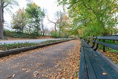 Central Park Path (Jemlnlx) Tags: canon eos 5d mark iv 5div 5d4 ef 1635mm f4 l is usm wide angle zoom lens nyc new york city state manhattan central park fall autumn foliage 2018 november