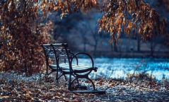 Finally after a long stroll, a place to rest and soak in the colors of Autumn... (cesar.toribio1218) Tags: benches parkbenches aplacetorest aseat beautifulcolors autumncolors autumn emptybench photosincolor blue naturescolors abeautifulmoment naturallight abeautifulplace quietplace river landscape peaceful naturalbeauty memories alone niceview greatshot newyork thebigapple nycparks sonyalpha inspire